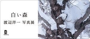 渡辺洋一 写真展 「白い森」