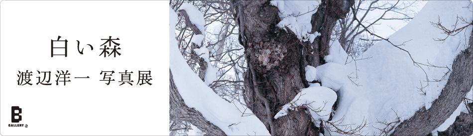 渡辺洋一 写真展 「白い森」|